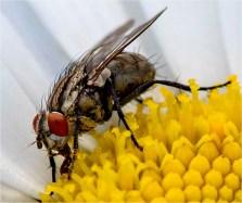Richard-B-Nectar-gatherer