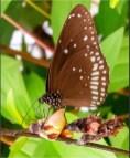Stephen-S-Butterfly