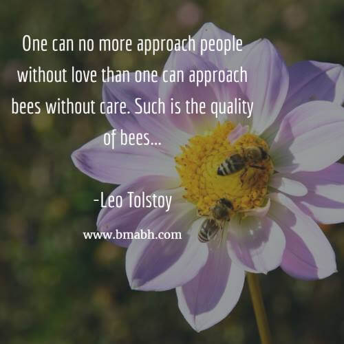 One can no more approach people without love than one can approach bees without care