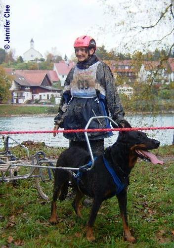 DogCart - Beauceron