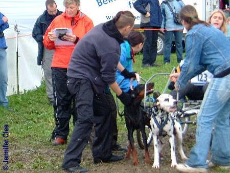 DogCart - Dobermann Dalmatiner