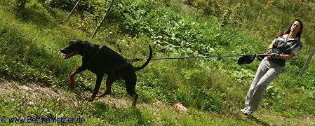 DogTrekking-3