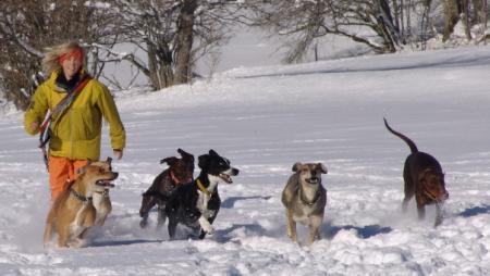 Johanna und die Hunde