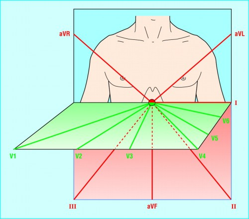 small resolution of vertical and horizontal perspective of the leads the limb leads view the heart in the vertical plane and the chest leads in the horizontal plane