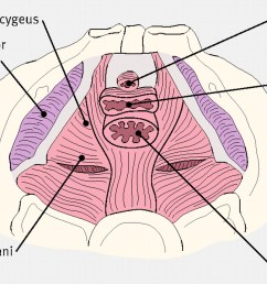 anatomy of pelvic floor [ 1280 x 923 Pixel ]