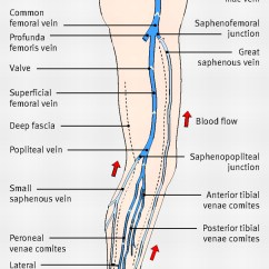 Lower Leg Nerve Diagram Balanced Xlr To Unbalanced 1 4 Wiring The Management Of Superficial Venous Incompetence | Bmj