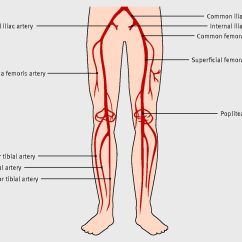 Vascular Anatomy Diagram Lower Led Strobe Circuit Diagnosis And Management Of Peripheral Arterial Disease | The Bmj
