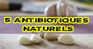 5 antibiotiques naturels