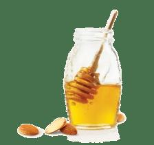 miel antibiotique