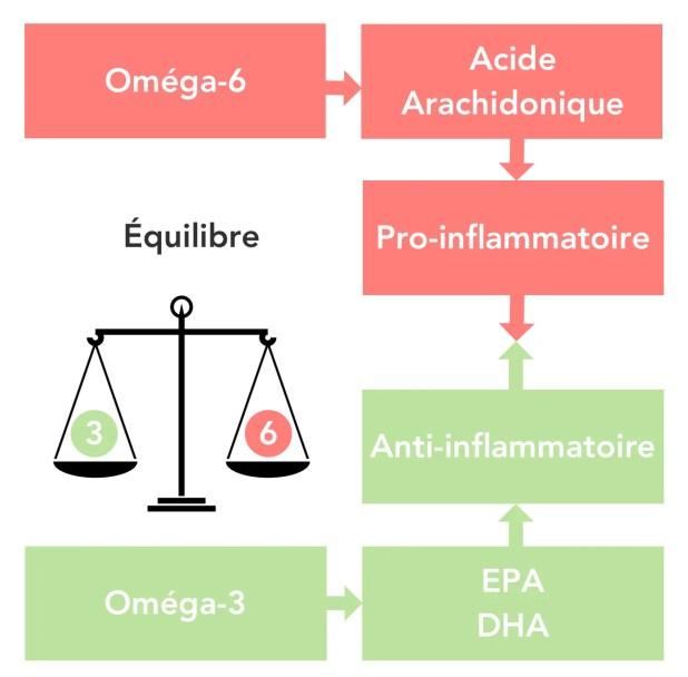 Oméga-3 et Oméga-6 : TOUT savoir sur les acides gras essentiels 6