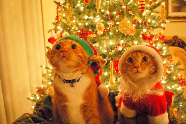 Merry Christmas: Best Display Pictures and Cover Photos To Share On ...