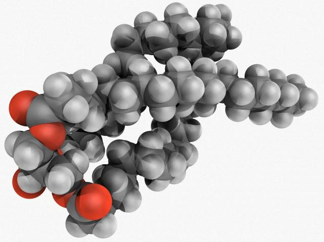 I lipidi  Struttura e funzione