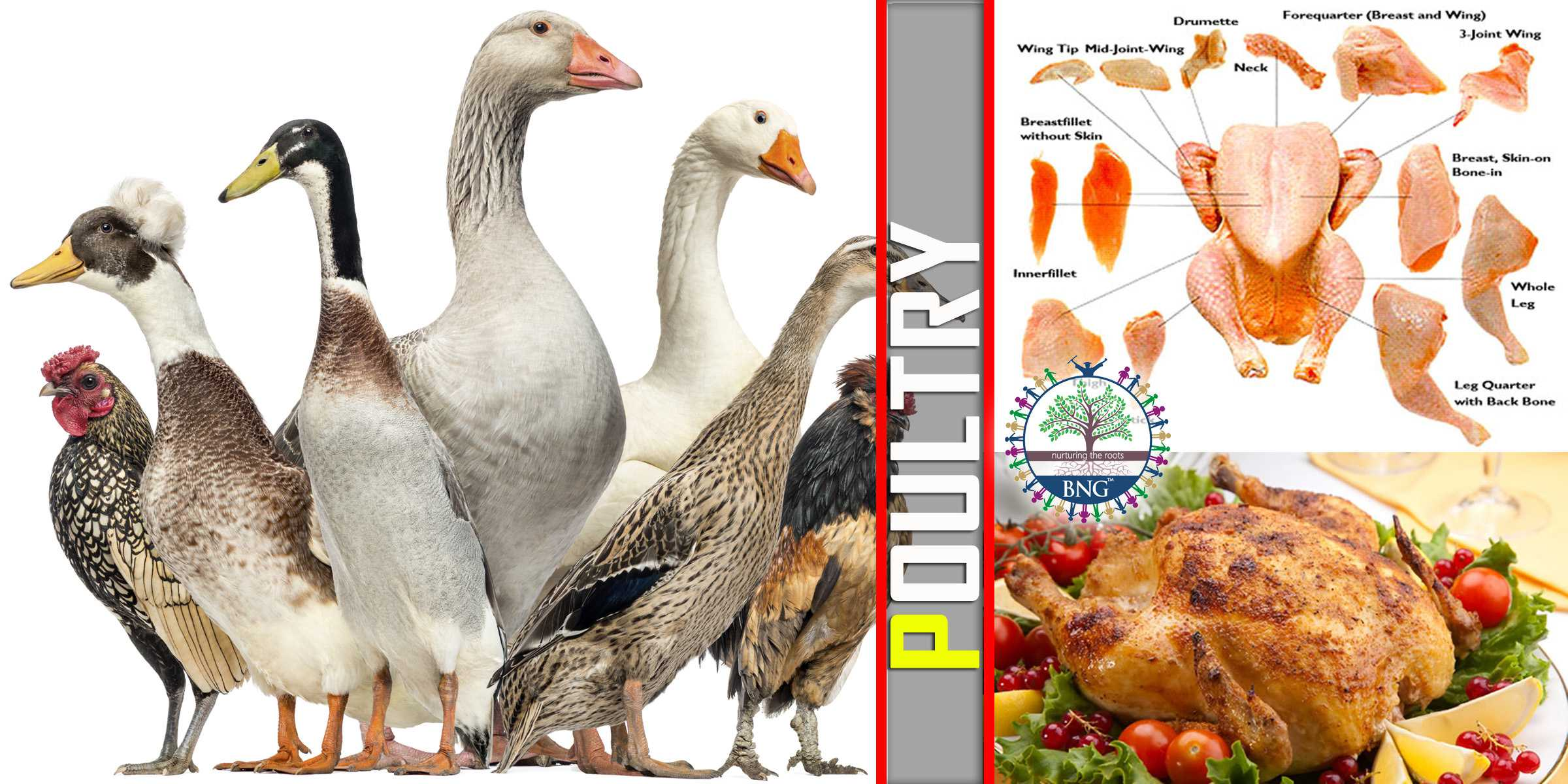 poultry types cooking bng