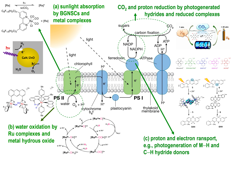 Photosynthesis Calvin Cycle Calvin Benson Cycle Calvin