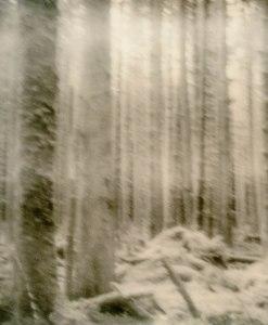 trees-iii