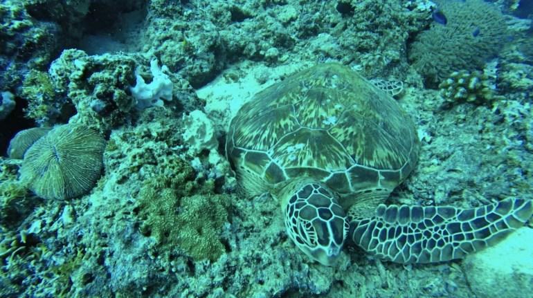 Snorkeling Gili Air