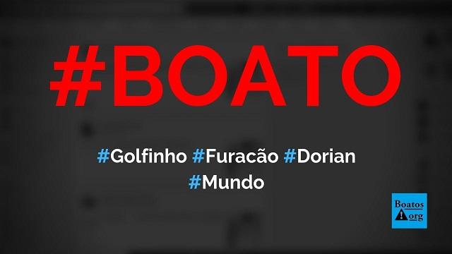 Fotógrafo flagra golfinho voando durante furacão Dorian, diz boato (Foto: Reprodução/Facebook)