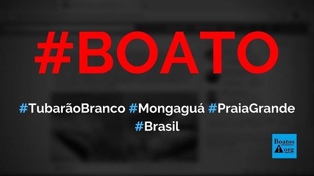 Tubarão branco é capturado em Mongaguá (SP) depois de devorar dois jovens na Praia Grande (SP), diz boato (Foto: Reprodução/Facebook)