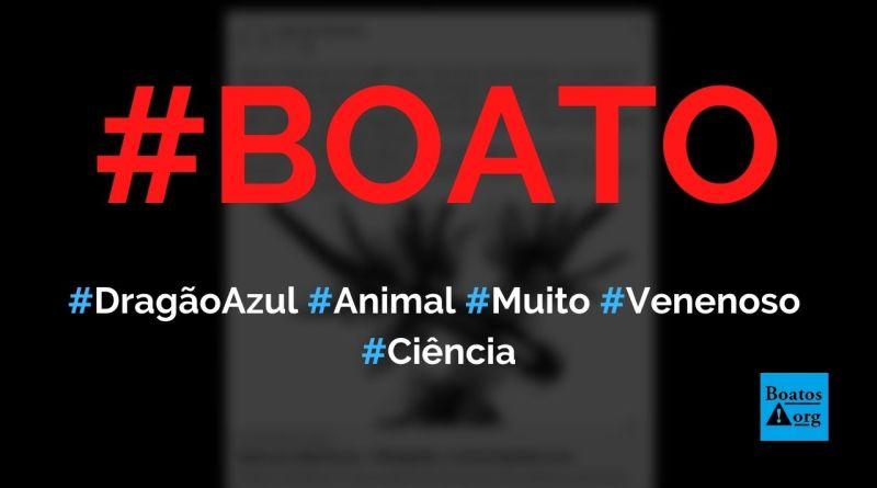 Dragão Azul (Glacus Atlantucus) é um dos animais mais venenosos do oceano, diz boato (Foto: Reprodução/Facebook)