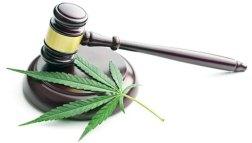 Cannabis leaf and gavel