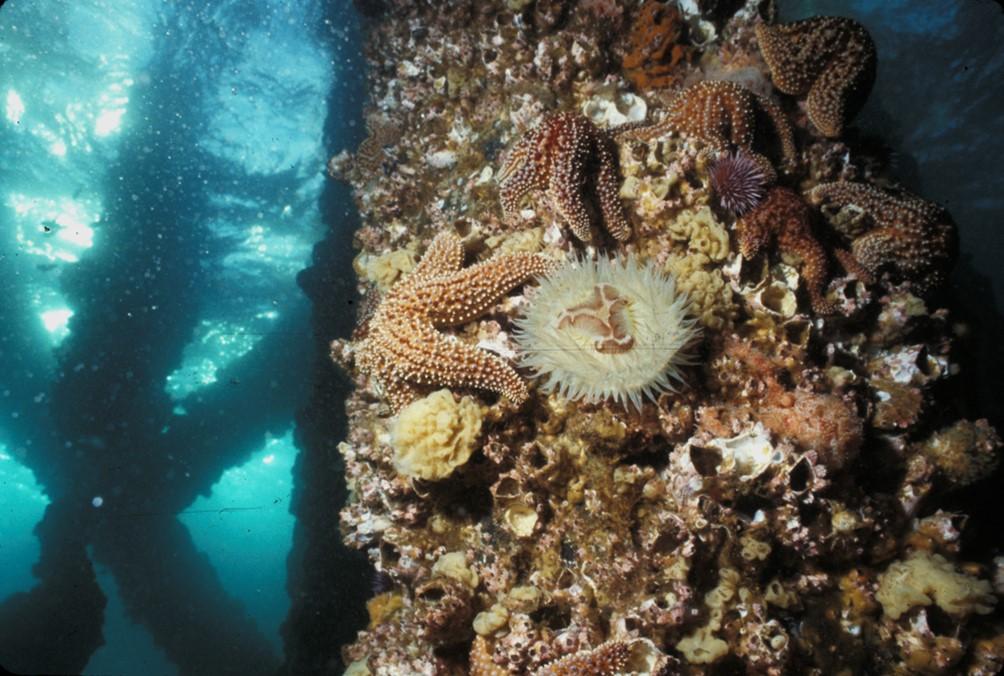 ExxonMobil, Platform Hondo, Marine Ecosystem, Offshore Oil Platform