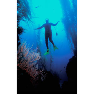 Underwater Dancing, Back Side Anacapa Island