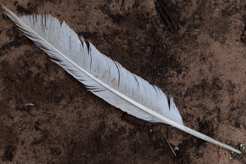 Feather, Petit Jean State Park, Arkansas