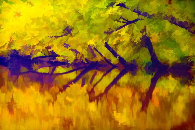 10590 Trees along Cedar Creek, Petit Jean State Park, Arkansas