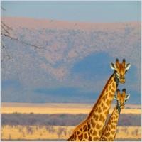 Leie bobil i Sør Afrika