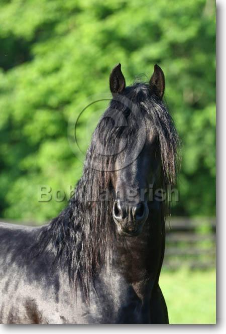 Bob Langrish Equestrian Photographer Images