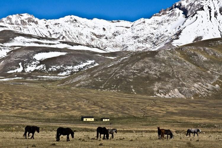 panorama-cavalli-stato-brado-abruzzo