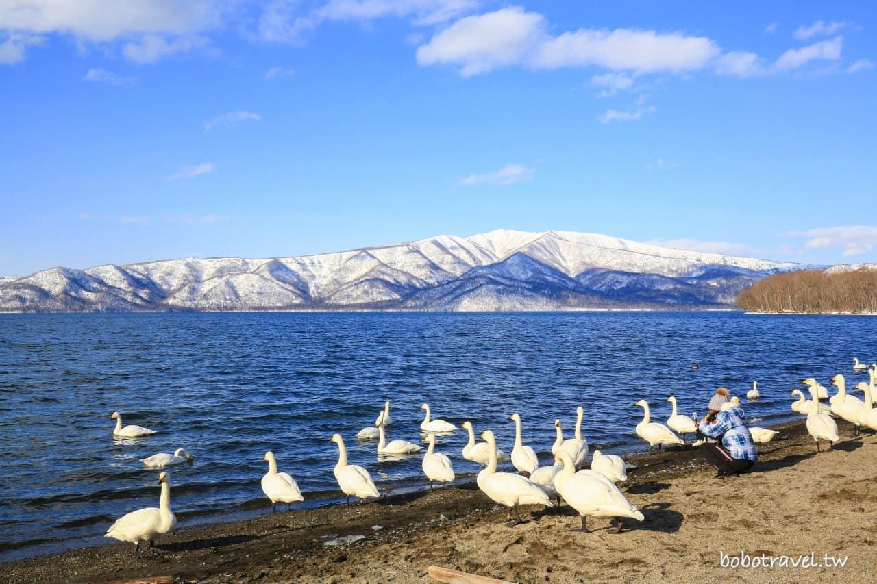 北海道・道東三湖|屈斜路湖 砂湯,日本最大破火山口湖,雪山下泡溫泉的白天鵝