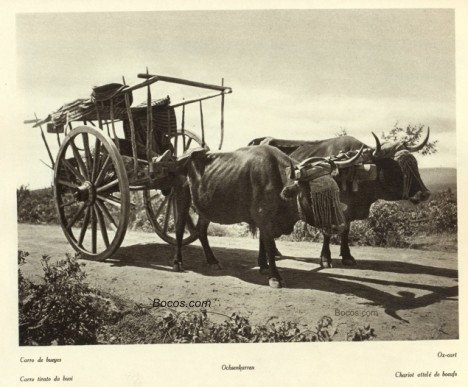 Carro de bueyes