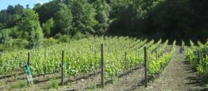 Bodega Viña Cuedo: La viña