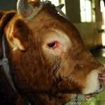 視頻:爲何不能吃狗肉、牛肉、五大家族?