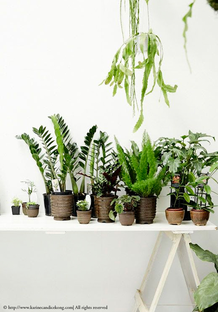 inside plants pictures - 700×1000