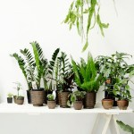 5 ways to display green plants at home
