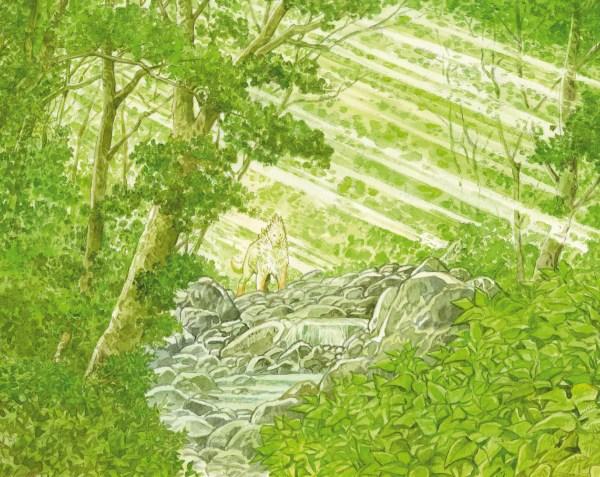 Forêt millenaire_05