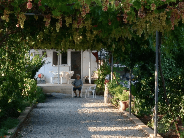 Çökertme grape vines and local lady