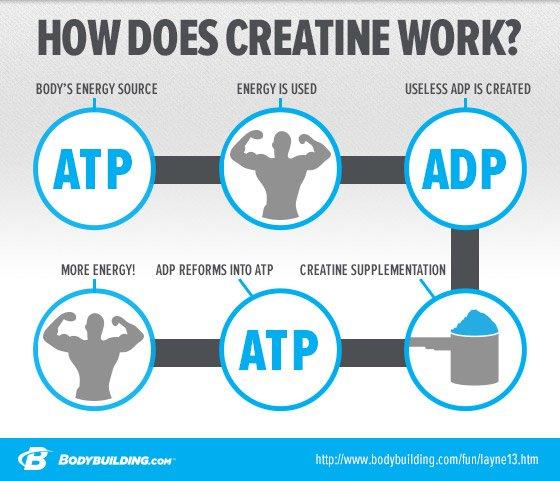 monohydrat czy kreatyna