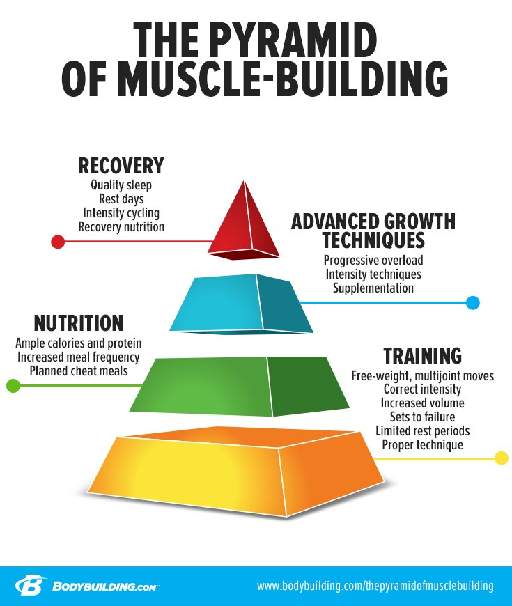 The Pyramid Of Muscle Building