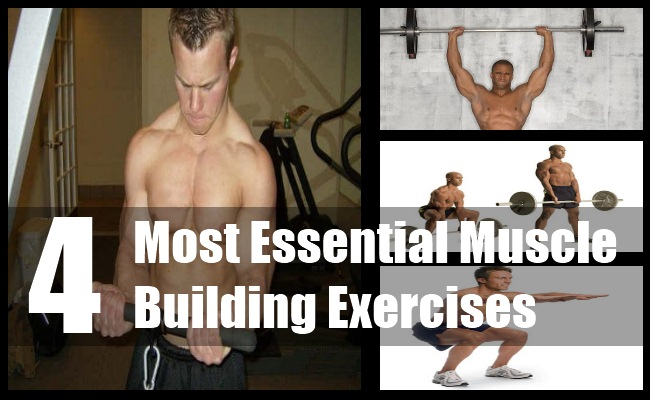 Essential Muscle Building Exercises