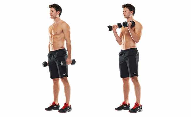 5 bicep exercises with dumbbells bodybuilding estore
