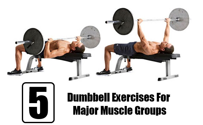 Dumbbell Exercises For Major Muscle Groups