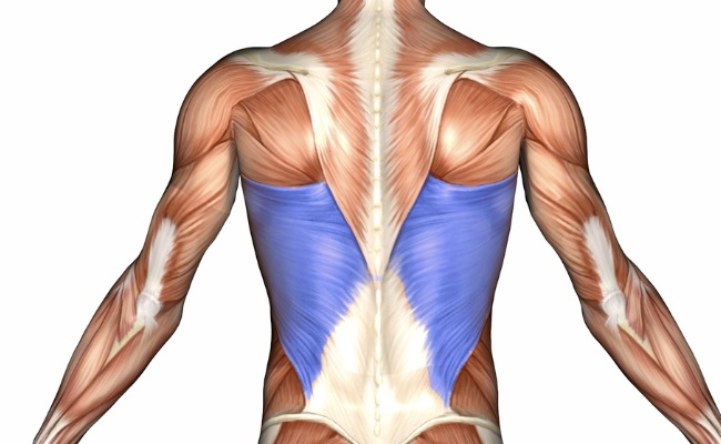 The Target Muscles