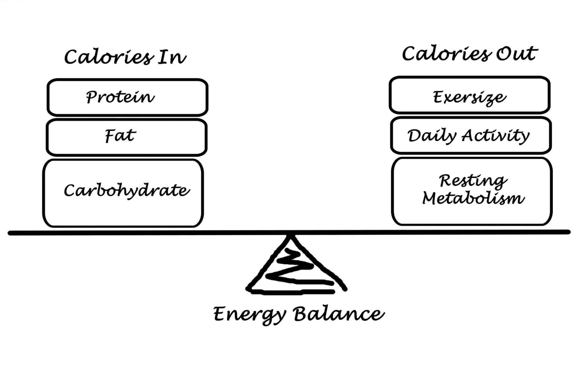 Maintenance Calorie Calculator Burn Fat Build Muscle