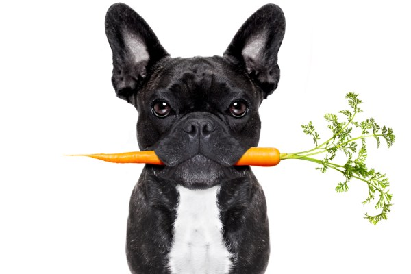 dog and carrot