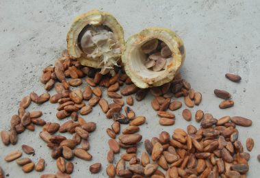 cacao gezond | rauwe cacao gezond | rauwe cacao | cacao | cacaopoeder
