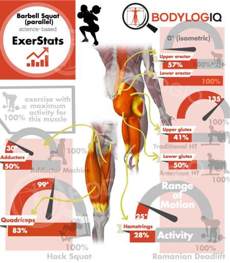 Exerstats-BB-Squat