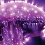 Kirlian Photography: It's Roots and Wings